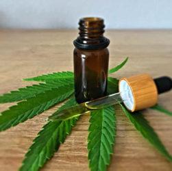 feuille de cannabis et huile de cannabis