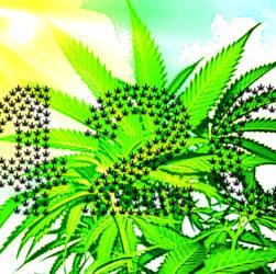 420 Symbole de la journée mondial du cannabis
