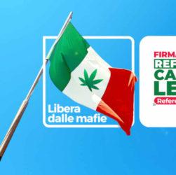 Le référendum pour dépénaliser le cannabis obtient 500 000 signature en une semaine.